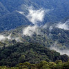Rainforest cloud formation