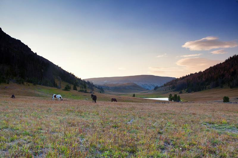 Horses graze in an alpine meadow deep in Wyoming's Absaroka Mountains