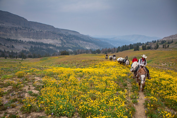Campers and pack horses ride through vibrant wildflowers en route to a remote camp in Wyoming's Gros Venture Mountains