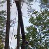 Tree felling on Epsom Common