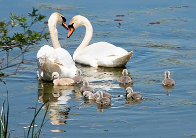 Family Swim