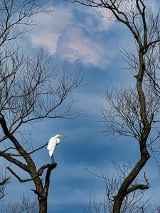 Heron Watch