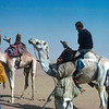 Locals on camels out of nowhere