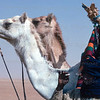 A local with camels, and a cigarette