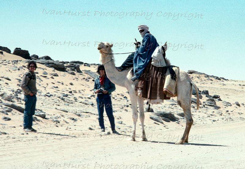 Camel transport in the Sahara