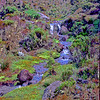 Marangu Route Small stream<br /> Heather Zone: small stream with erica arborea