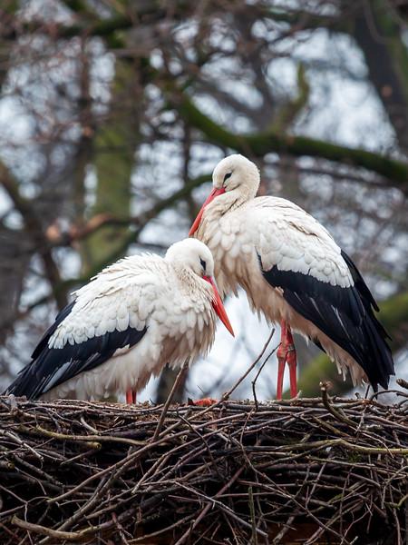 Stork - symbol of The Hague