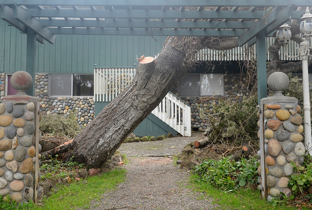 . A tree hangs sideways at the entryway to an apartment building on Sunset Drive in Pacific Grove after falling over as a large storm brings strong winds and rain to Monterey County on Sunday January 8, 2017. (David Royal - Monterey Herald)