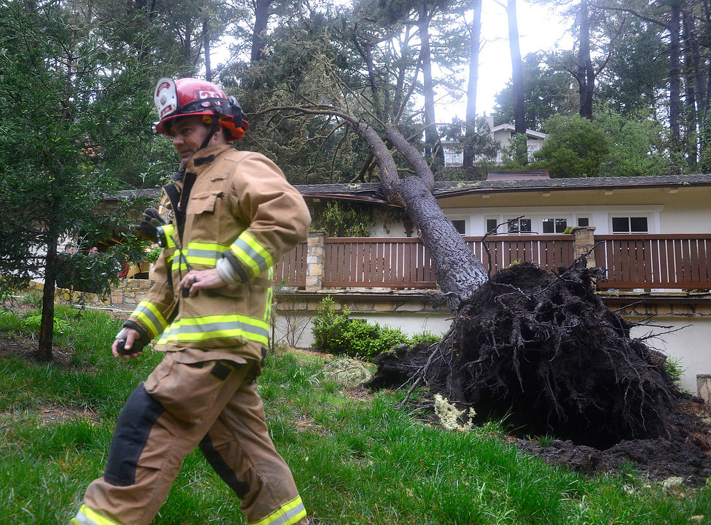 . Calfire captan Rick Baier walks past a pine tree that fell on a house on Crest Road in Pebble Beach as a large storm brings strong winds and rain to Monterey County on Sunday January 8, 2017. (David Royal - Monterey Herald)
