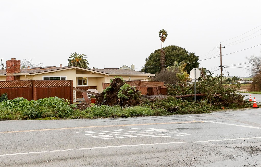 . A fence damaged by a fallen tree at a home on the corner of Martines Rd. and Harrison Rd. is pictured on Sunday, January 8, 2017 in Salinas, Calif.  (Vernon McKnight/Herald Correspondent)