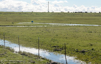 Wet pastures are seen along Oroville Chico Highway south of Chico, Calif. Wed. Jan 11, 2017. (Bill Husa -- Enterprise-Record)