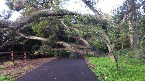 Ardenwood Oak Tree, Ardenwood Historic Farm, Fremont