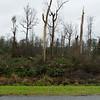 Storm Damage_GA 37 between_east of South Coffee Road -16808