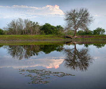 Texas Reflection