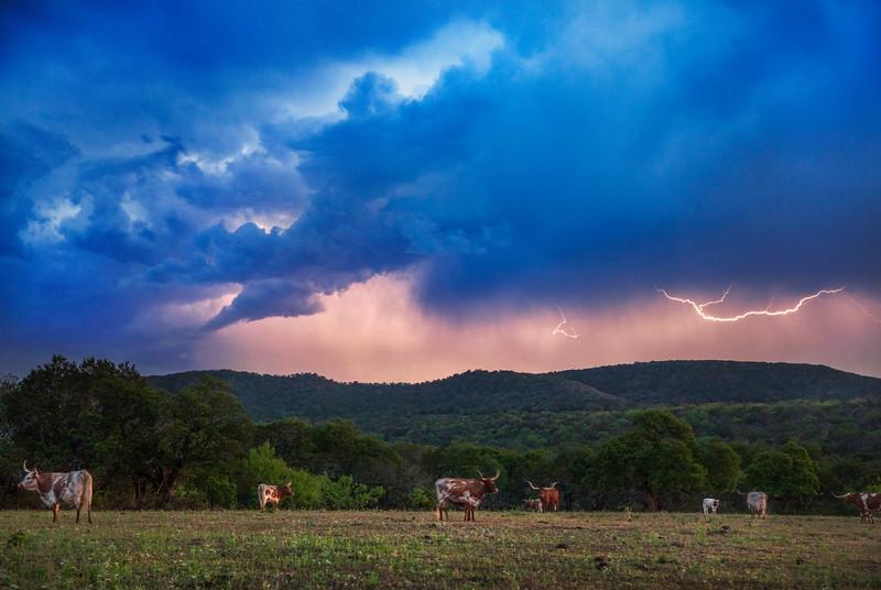 Lightning above Texas Longhorn