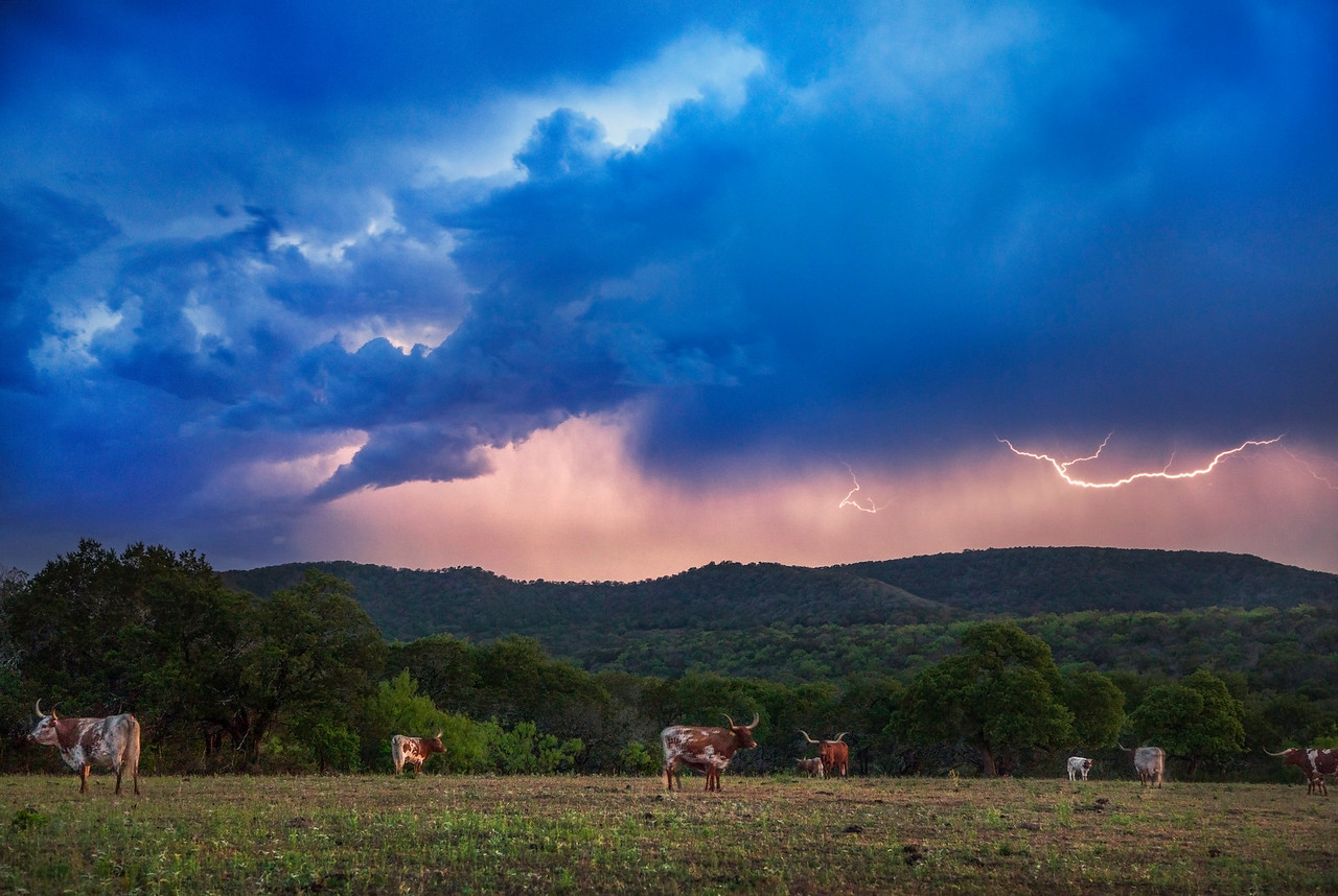 Lightning above Texas Longhorn