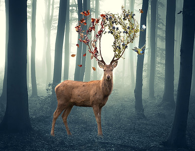 Deer by Tracey Perrin