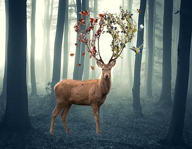 Deer by Tracey Perrin