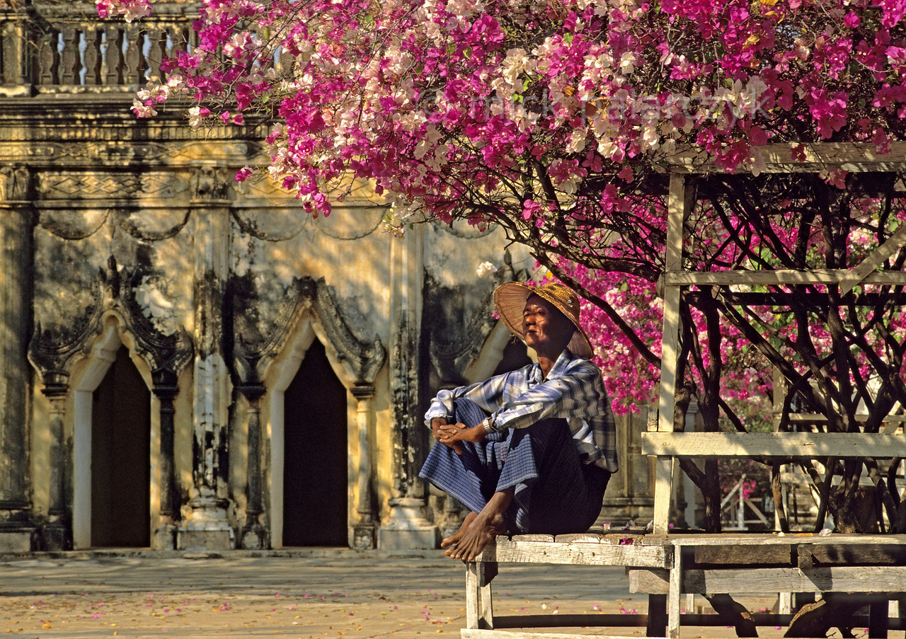 [BURMA 24.899]<br /> 'Resting under a bougainvillea.'<br /> <br /> In the courtyard of Bagan's Ananda Temple a gardener is taking a rest under a bougainvillea. Photo Mick Palarczyk.