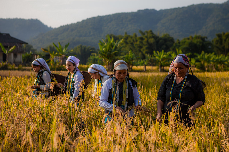 Galo ladies working in the field, Basar, Arunachal Pradesh, India