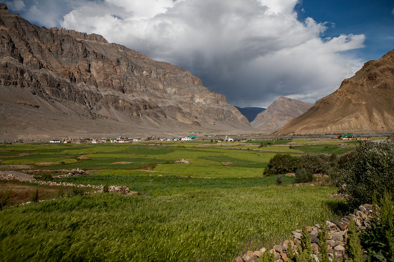 Green peas farms in the remote villages on the way from Manali to Kaza in the Spiti valley