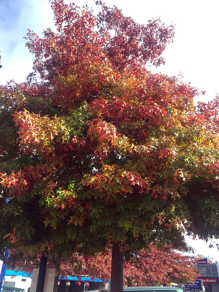 Fall colours starting to make a mark in Nelson, New Zealand
