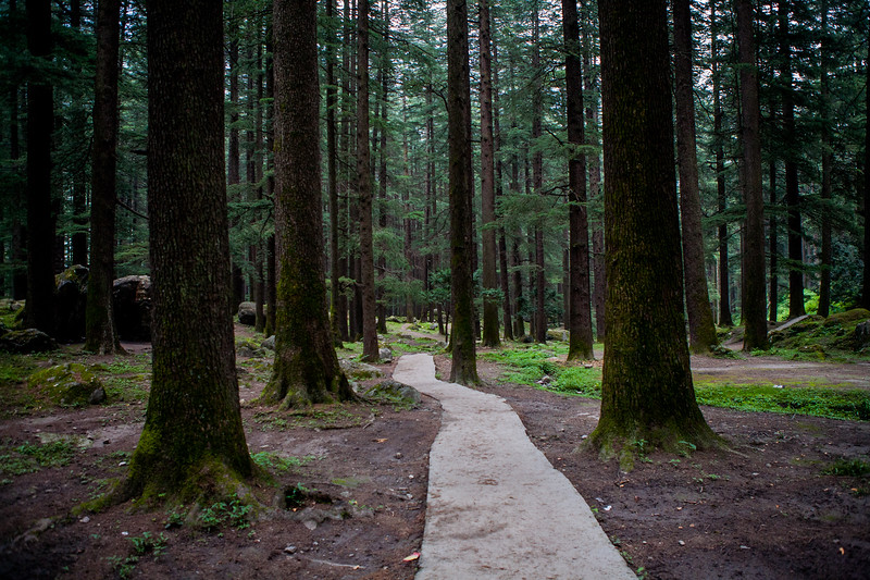 Forest in Manali