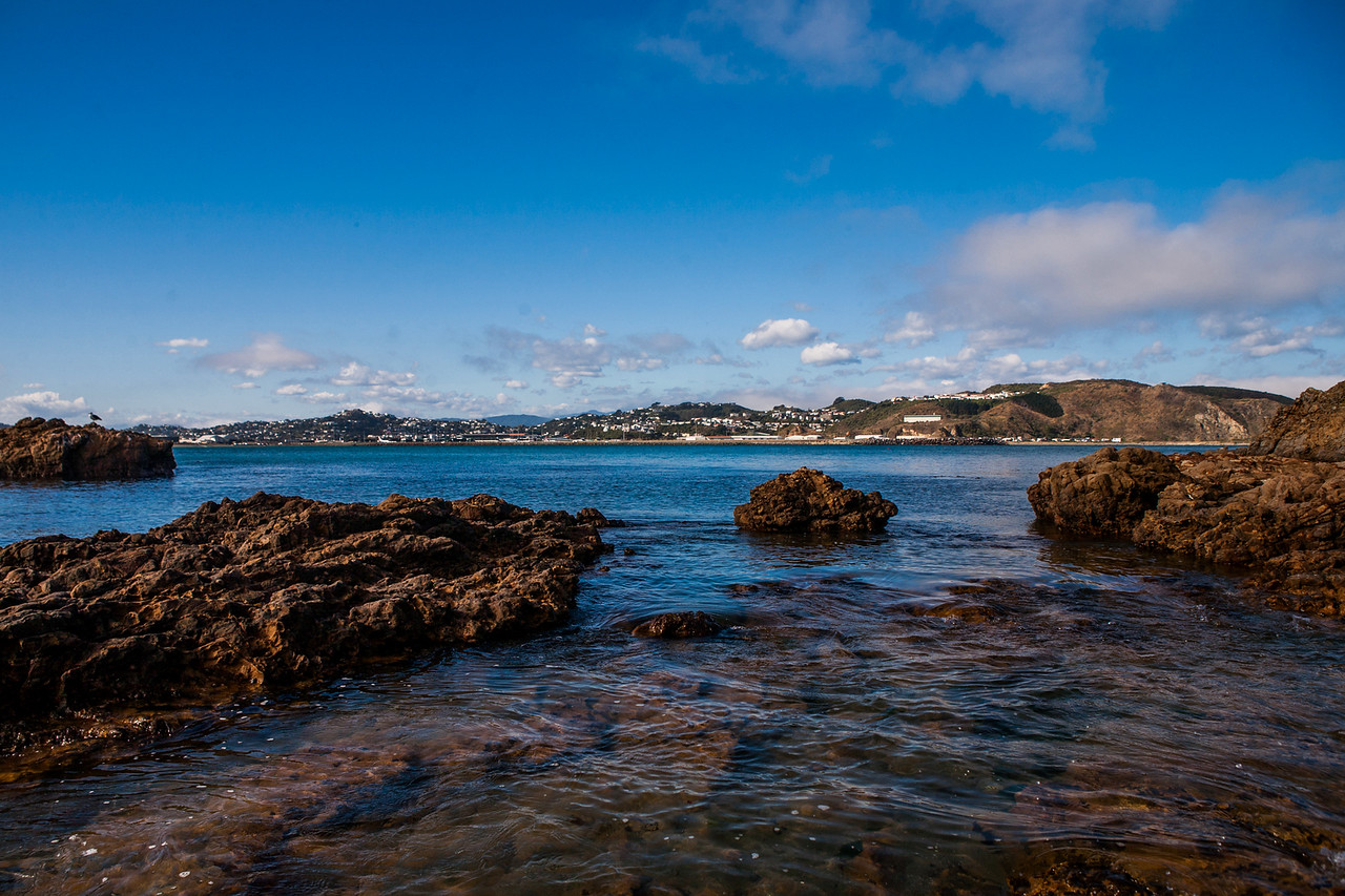 Coastline of South Wellington, on the walk from Liall Bay to Island Bay, New Zealand