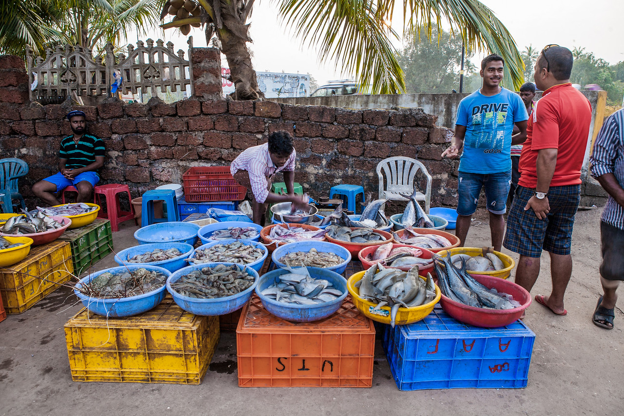 Fresh fish at the Morjim fish market, Goa