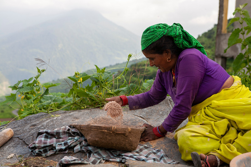 A Garhwali woman is busy husking the rice, for storing the annual produce. In Uttarakhand, India.
