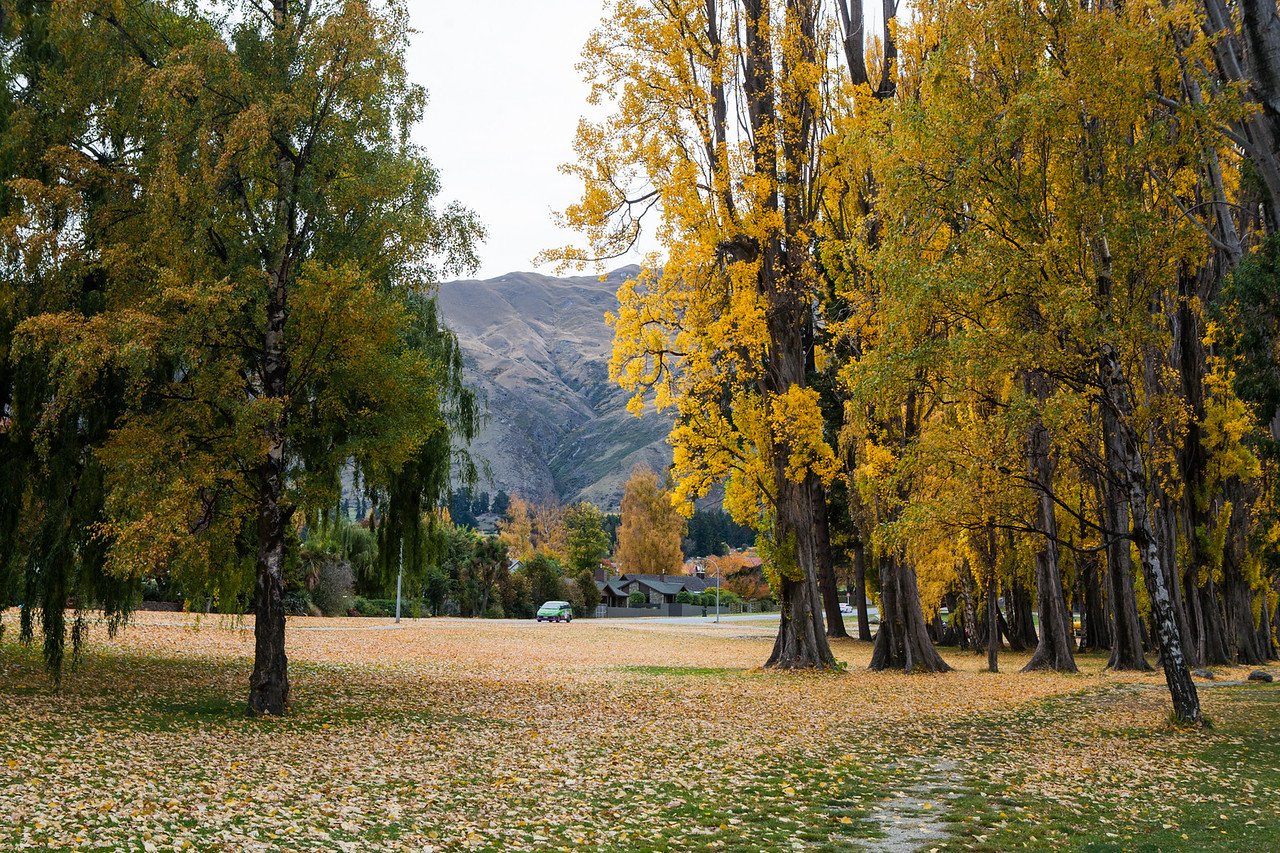 Fall colours at Wanaka, New Zealand