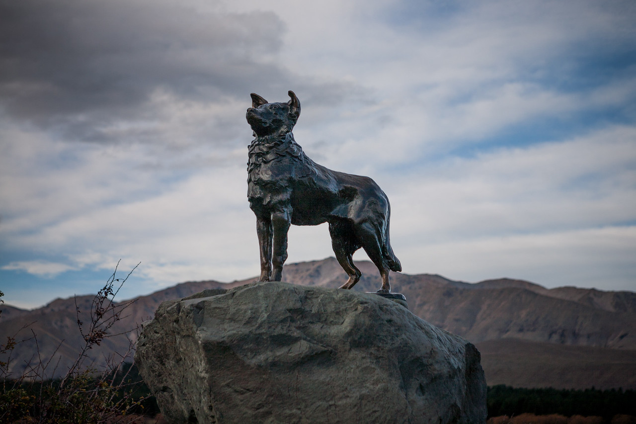 Monument of The Collie dog, Lake Tekapo,  New Zealand