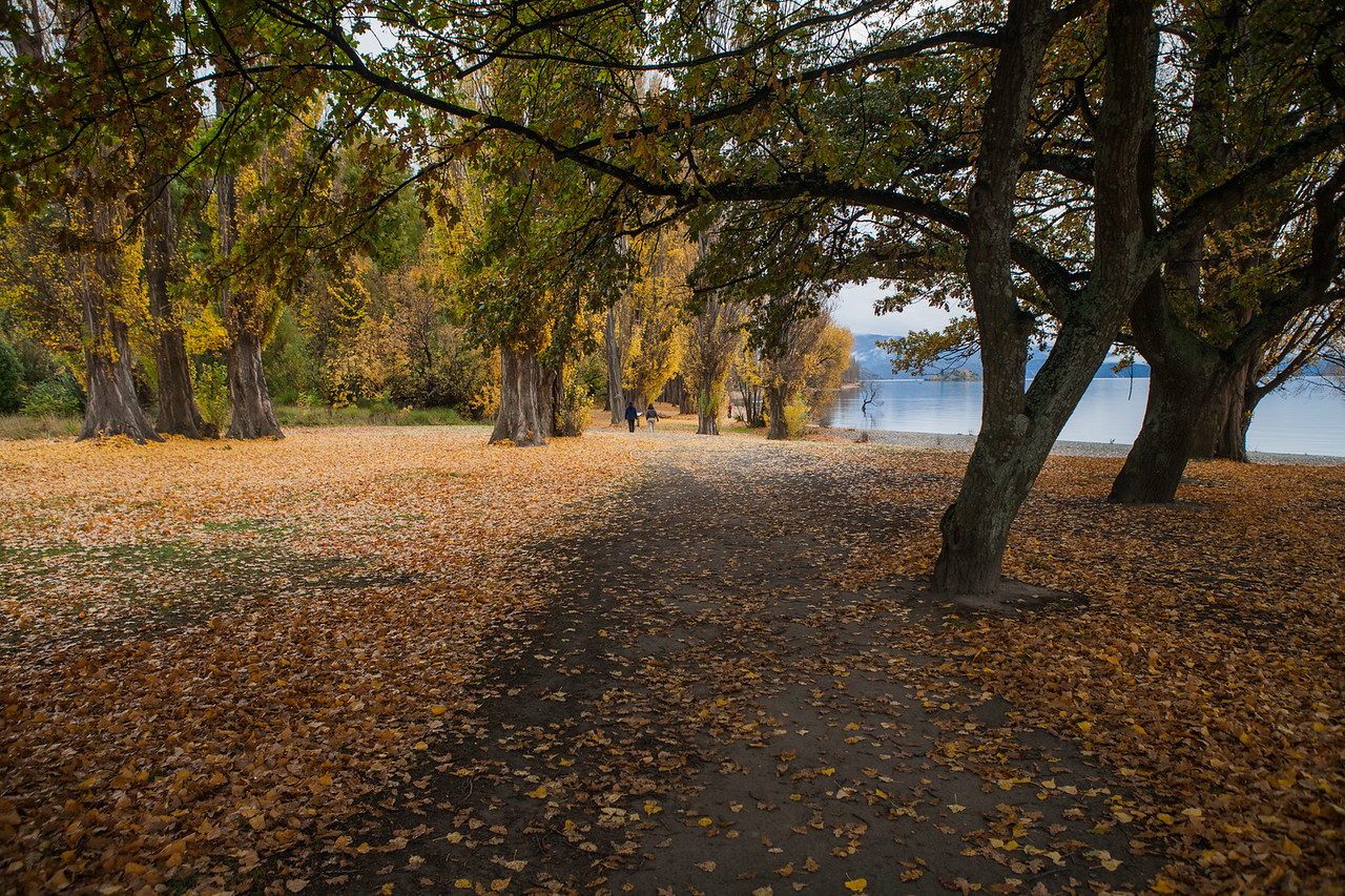 Fall colours at lake Wanaka, New Zealand
