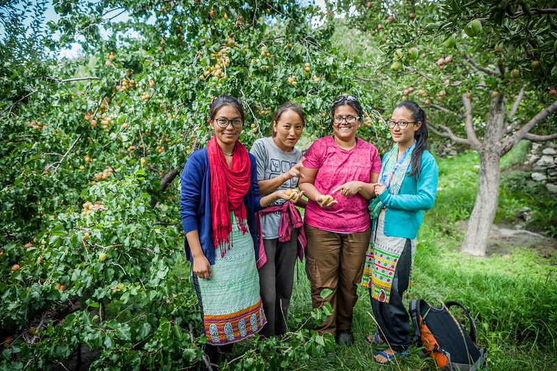 Fresh apricots, Chango, India