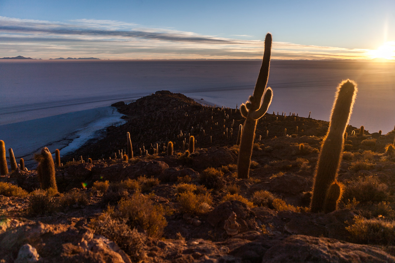 Cacti and sunrise on Incahuasi island, Salar de Uyuni, Bolivia