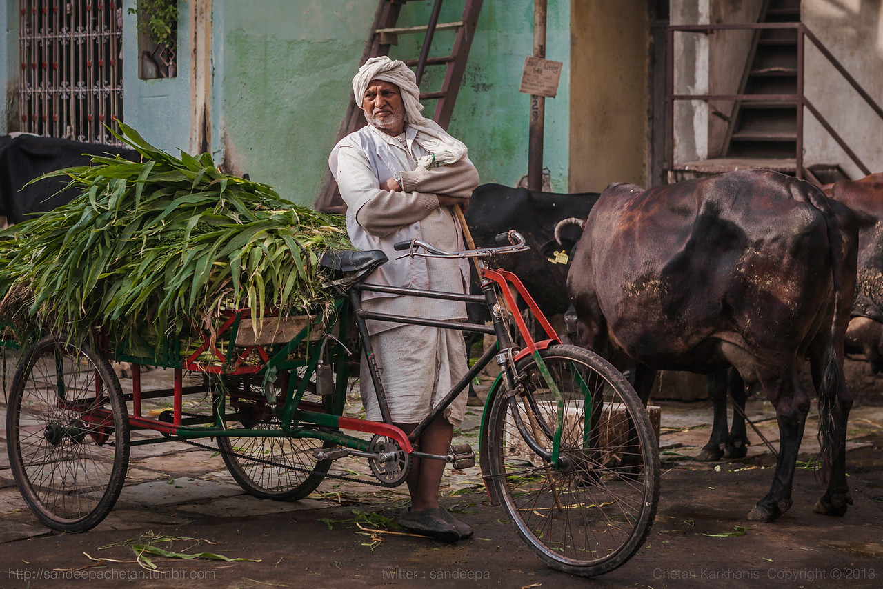 He delivers fodder for the cows to the households that have subscribed to his services! Cows are considered pious in the Hindu religion. Across India, they are worshipped by many. This is especially seen in Gujarat.