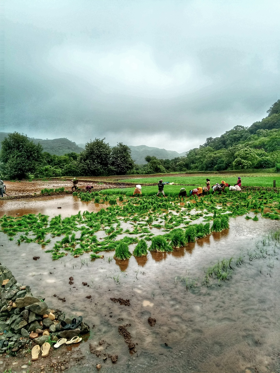Monsoon treks in the Sahyadris like the Andharban trek boost the local economy.