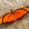 Butterflies of Amazon rain forest
