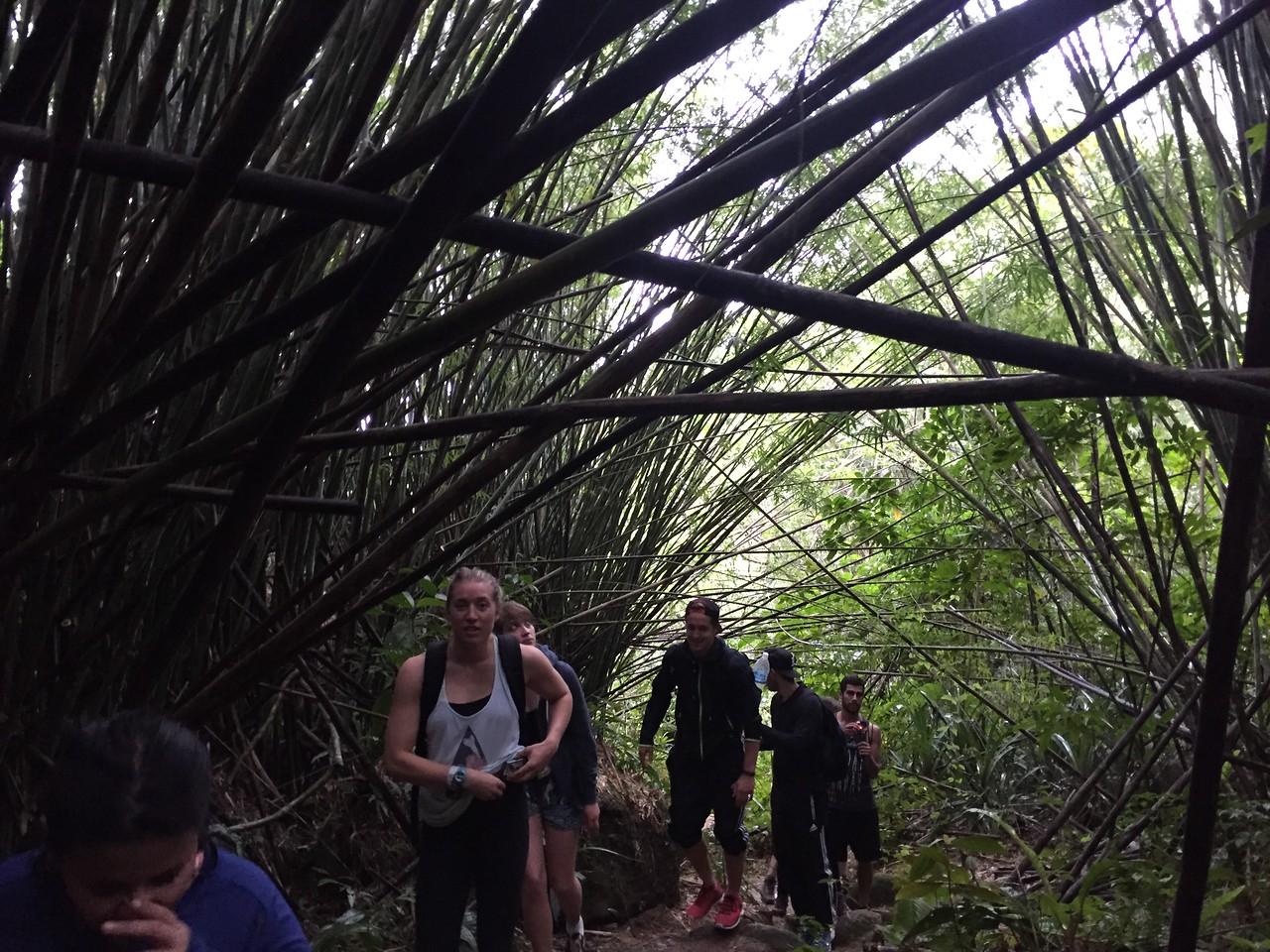 HI Hostel group on trek at Ilha Grande (Big Island), rio de Janeiro, Brazil