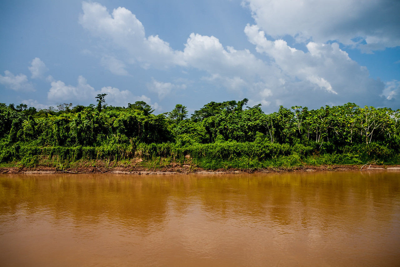 The muddy waters of the Amazon surrounded by the Amazon rain forest