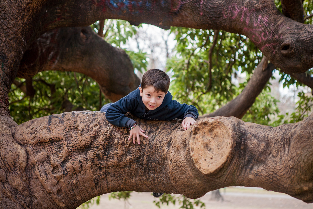Tree climbing on the Ombu tree in a public park in Buenos Aires, argentina
