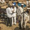Men engaged in deal at cattle fair at Rajur, Maharashtra, India
