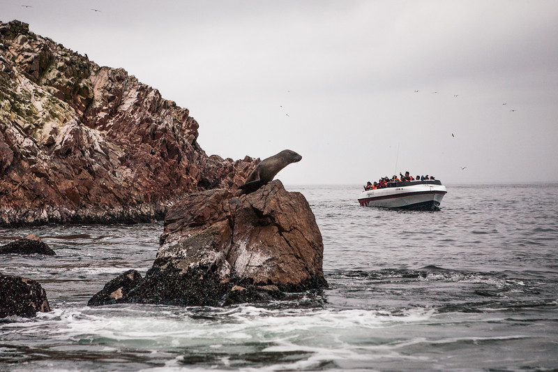 Sea lions and other marine life at Islas Ballestas, Peru