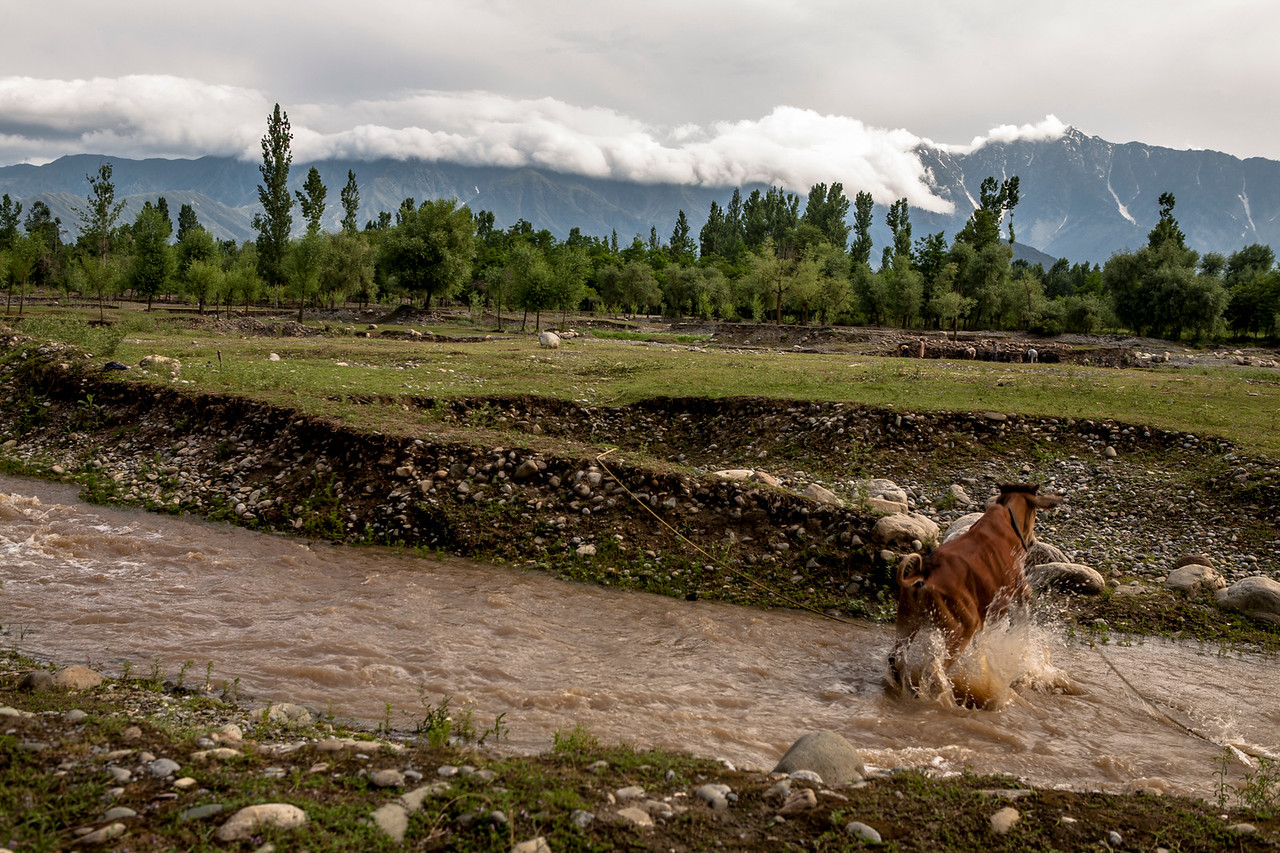 The farms at Kolam Chinar, a village with sulphur srings in Kashmir