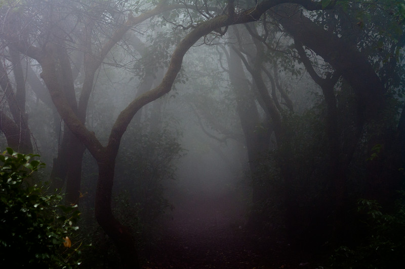 "Mahabaleshwar, Maharashtra, India <br><br><br><br> Back to <a href=""http://photos.sandeepachetan.com/"">PHOTO GALLERIES</a> <br><br><br>"