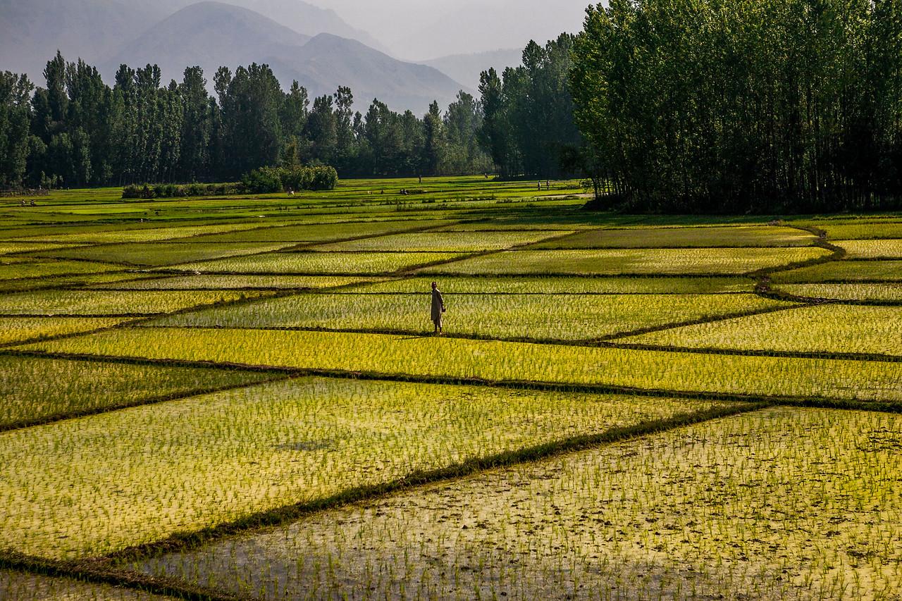 Train journey from Srinagar to Anantnag, Kashmir, India