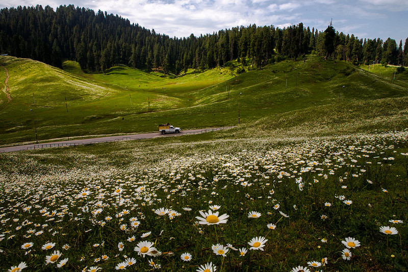 Gulmarg blooms, Kashmir, India