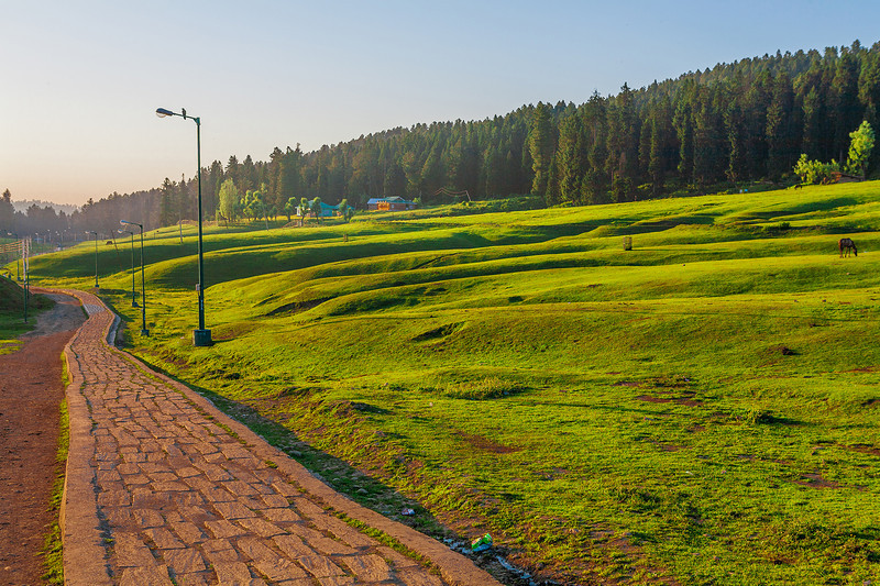 Meadows at pathways in Yusmarg, Kashmir, India