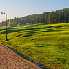 Meadows at pathways in Yusmarg, Kashmir, India