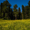 Meadows at Yusmarg, Kashmir, India
